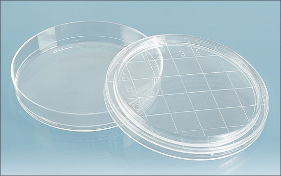 Petri Dish 65 mm with Convex Gridded Bottom - 3 pack