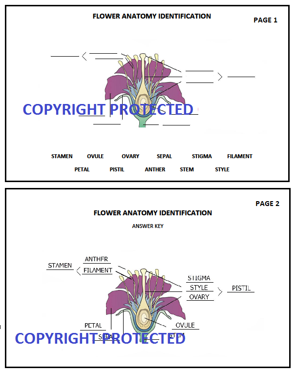 Cycle 1 Foundations Science Flower Diagram