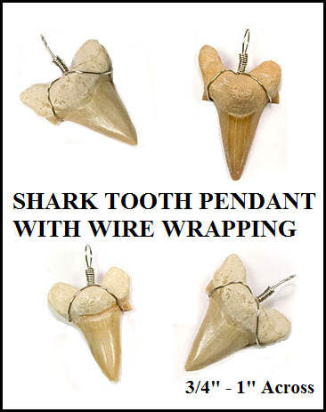 Fossil Shark Tooth Pendant