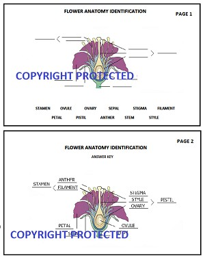 Flower Anatomy PDF Download